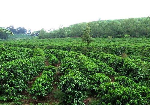 CostaRica plantation