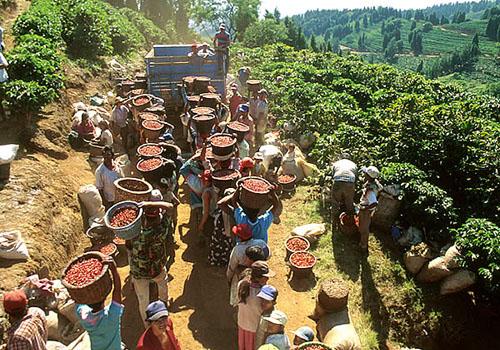 Sbor coffee CostaRica